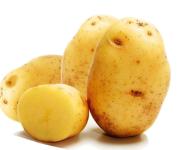 Фото картофель бентье