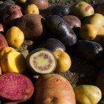 Россыпь сортов картофеля