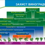 Схемы защиты винограда